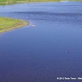 04-06-12 Myaka River State Park - IMGP9875.JPG