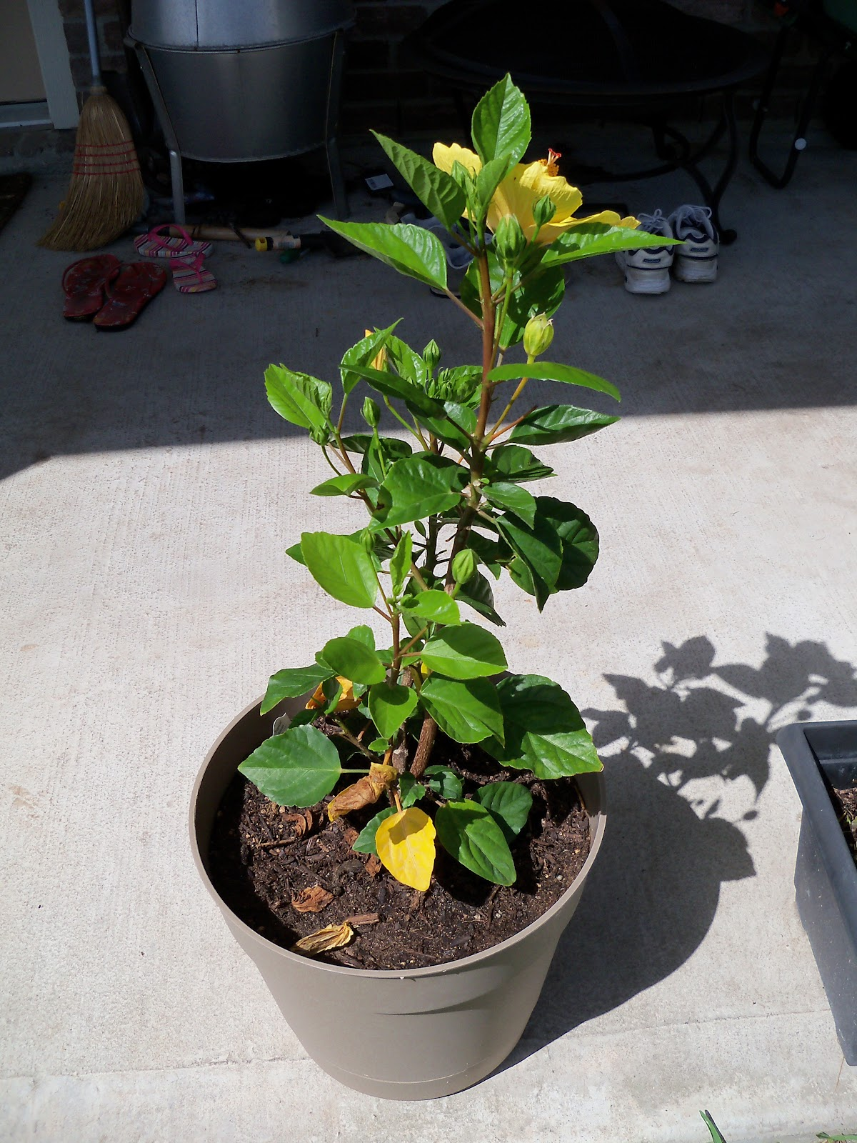 Gardening 2010, Part Three - 101_3885.JPG