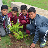 Gurukul Green Revolution (21).jpg