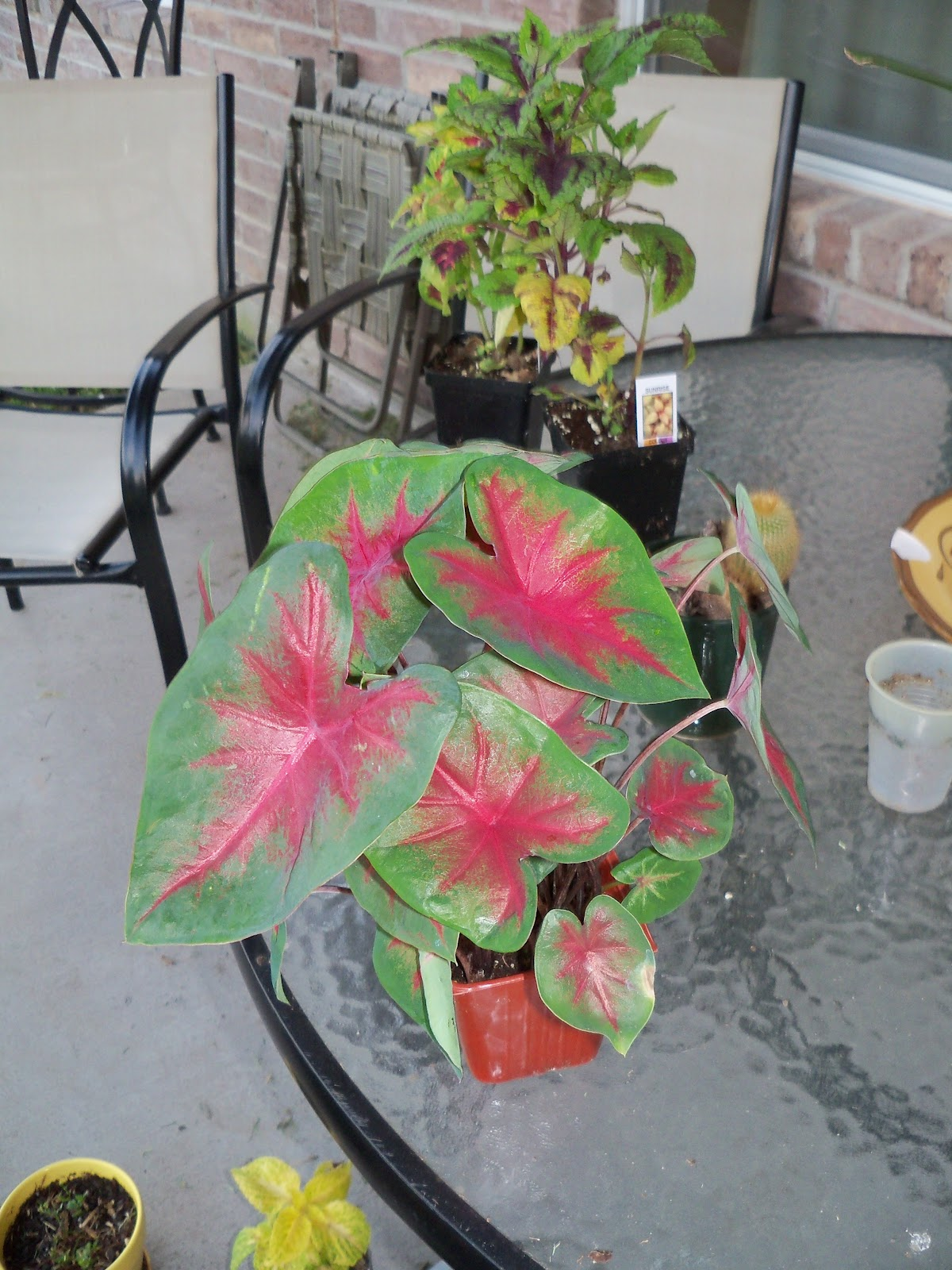 Gardening 2010, Part Three - 101_4327.JPG