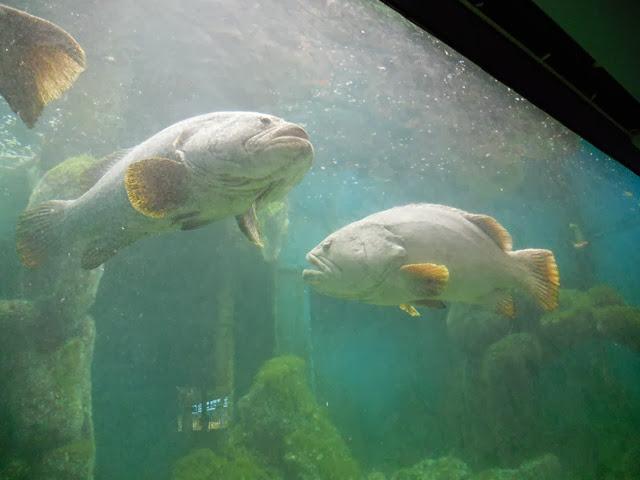 Akuarium-Perikanan-Penang-Aquarium