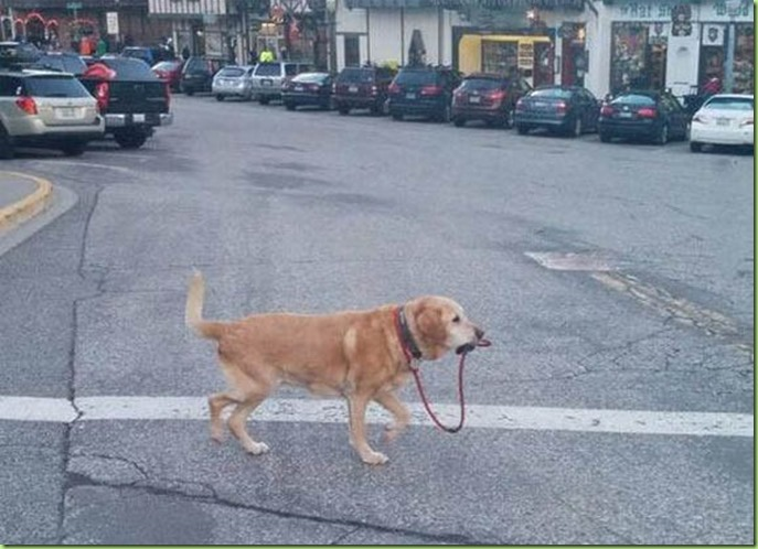 self-walking-dog