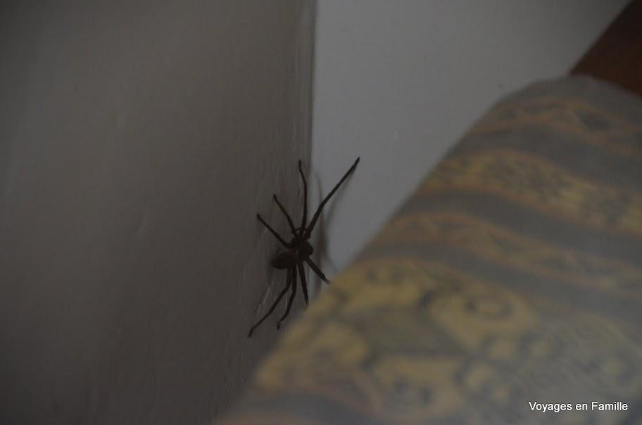 Sidemen Spider