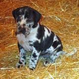 Petunia @ 6 weeks