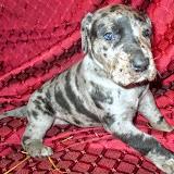 Boone @ 4 weeks