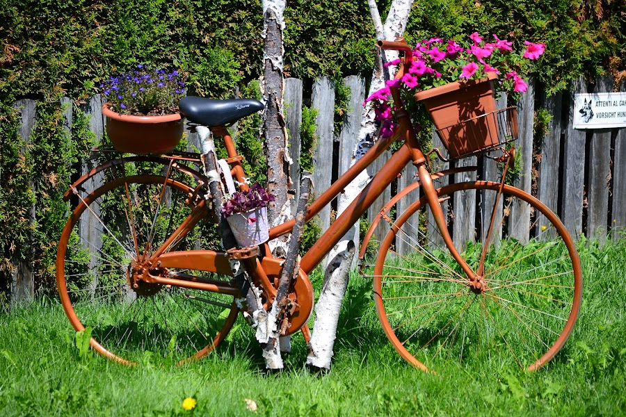 A colorful bicycle by Eugen Opritescu - City,  Street & Park  Street Scenes ( flowers, dolomites, bicycle, streets, italy )