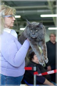 cats-show-24-03-2012-fife-spb-www.coonplanet.ru-088.jpg