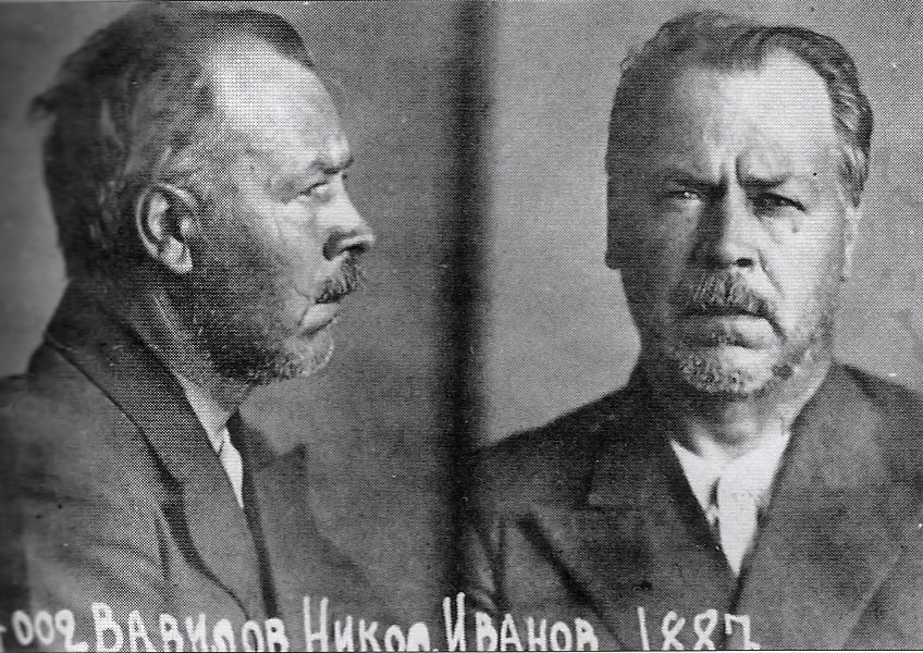 vavilov-mugshots