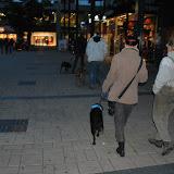 KNON-honden in Emmen - DSC_0844.JPG