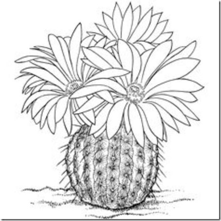 flores masdibujos  (74)