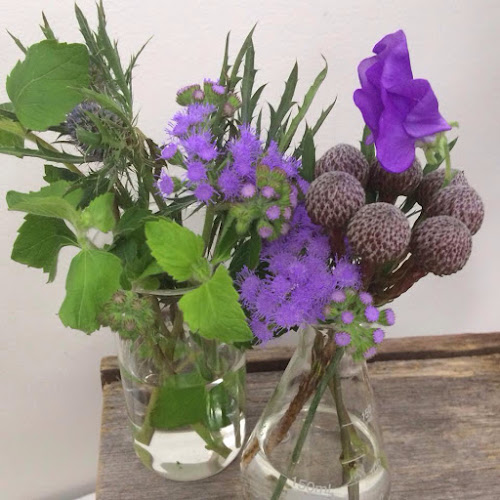 Purple flowers in beakers