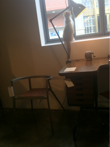 seoul cafes cat
