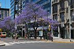 November in Buenos Aires is the end of spring, and when we first arrived many of the trees were filled with beautiful purple blossoms.