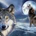 Chó sói tiếng anh là gì?
