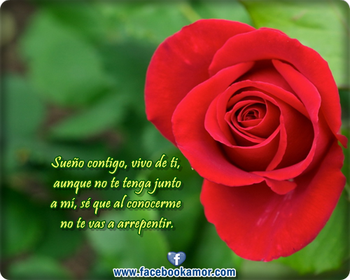 Imagenes De Rosas Rojas Con Frases Miexsistir