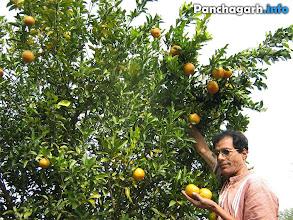 Photo: Orange garden in Boda