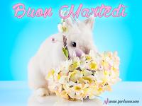 buon martedi immagine amici buongiorno coniglio fiori pasqua.PNG