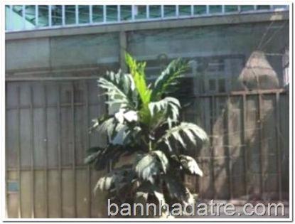 ban-nha-ban-dat-binh-chanh-CQQDCV51