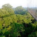 Amazing rainforest canopy boardwalk