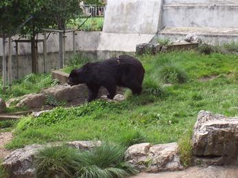2007.07.05-009 ours à lunettes