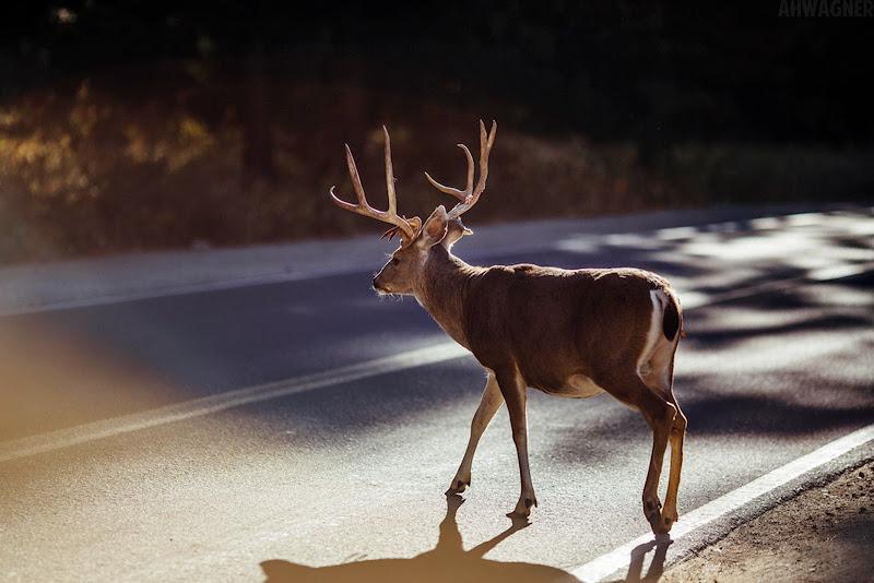 IMAGE: https://lh3.googleusercontent.com/-oAww9EOmQ0k/UoK_1afTxvI/AAAAAAAAO4s/mP9TymhEoQA/s800/deer.jpg