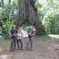 poznato drvo - vrijeme za predah i koju fotku