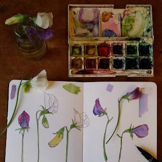 Sketchbook Sweet Peas by Alice Draws The Line
