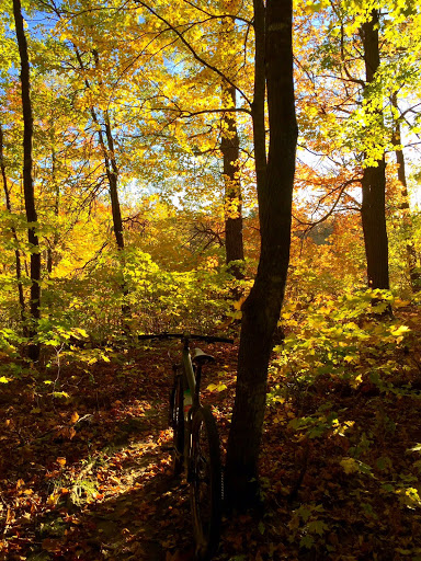 Great color on the mountain bike trail