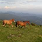 2010  16-18 iulie, Muntele Gaina 074.jpg