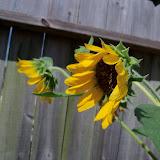 Gardening 2011 - 101_0011.JPG