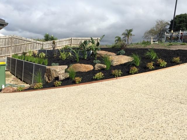 garden, lomandra, lime tuff, phormium, nandina, birds of paradise