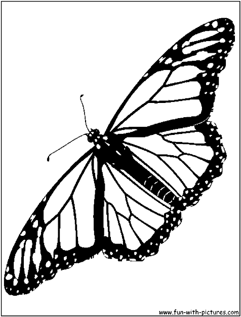 Monarch Butterfly Coloring Page Viewing Gallery For  Monarch Butterfly  Drawing Black And White  Kids