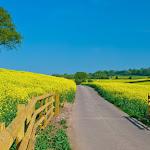 wildlife-wallpaper-green-land-pixel-desktop-road-field-farms-wallpapers-nature-large.jpg