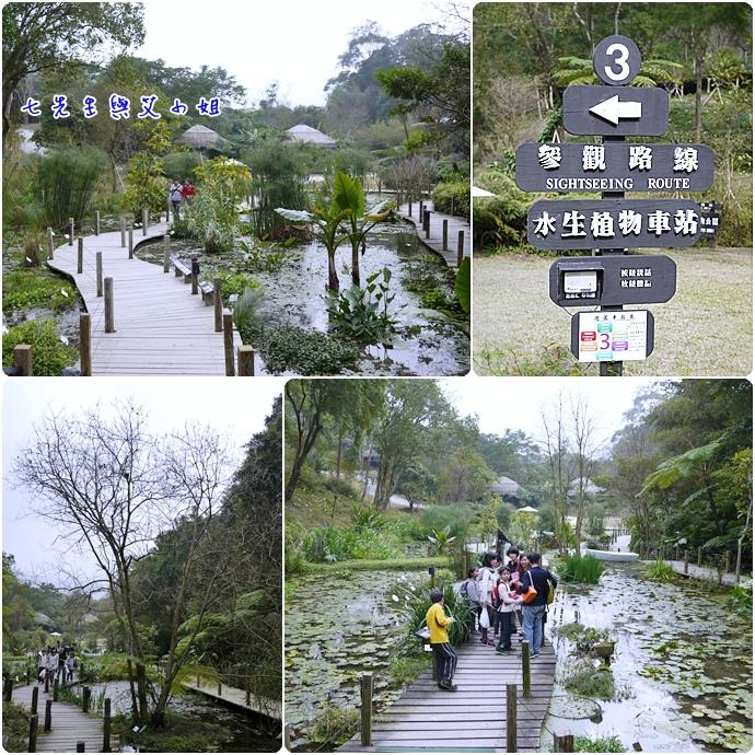 31 水生植物公園