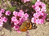 butterfly-DSC02679.jpg