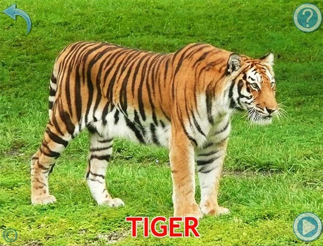 animal-for-kids-tigre