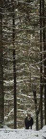 SOLITUDE  Chamois durant les premières neiges de l'année (novembre 2013)