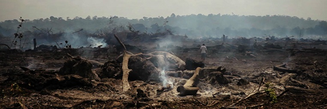 Amazon rainforest burned by Norte Energia, a company outsourced by Belo Monte to clear the area that will become a lake after the Belo Monte dam is built. Rather than use the trees felled in the area where the lake will be created, the plant purchases irregular wood. Photo: Márcio Isensee e Sá