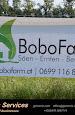 Bobo28Aug16_019 (1024x683).jpg