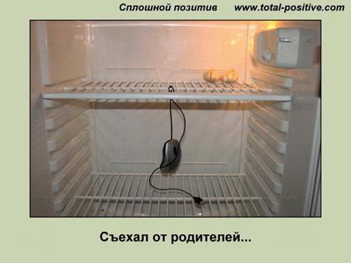 Компьютерная мышь в холодильнике