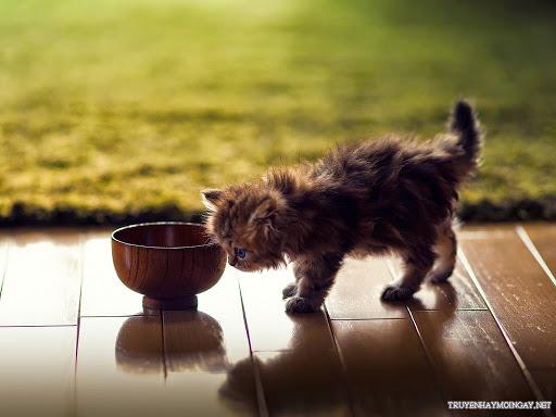 Hình Nền Mèo Con Đáng Yêu Cho Máy Tính