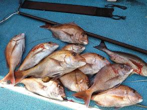 Photo: 釣果です。 クマガイさんの釣果その1