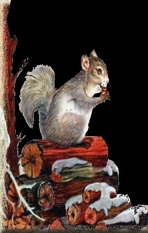 esquilo-tube