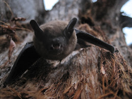 Same bat getting pissed at me for sticking my camera in his face.