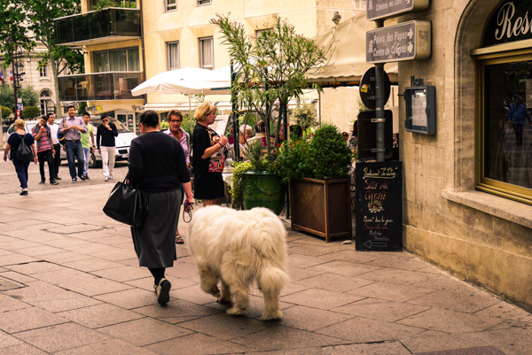 photo Avignon-7_zpsvts6moei.jpg