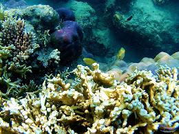 family trip pulau harapan, 1-2 agustus 2015 gopro 26