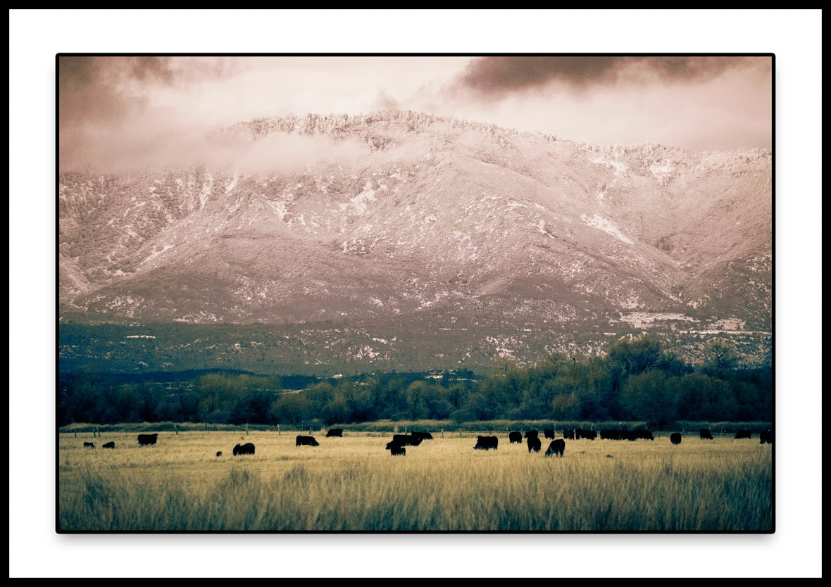 Landscape photography, California, Pines to Palms Highway, Mountains, cows grazing