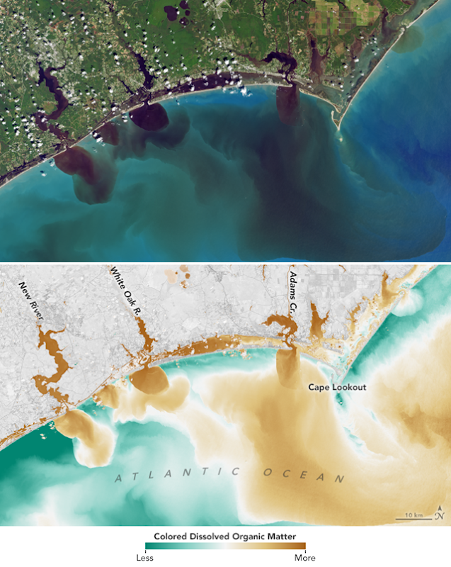 This pair of images shows how the flooding from Hurricane Forence has affected water quality in the White Oak River, New River, Adams Creek, and their outflows along the North Carolina coast on 20 September 2018. The natural color image from Landsat 8 reveals how soils, sediments, decaying leaves, pollution, and other debris have discolored the water in the swollen rivers, bays, estuaries, and the nearshore ocean. The second image combines visible and infrared data from Landsat to reveal the amount of colored dissolved organic matter (CDOM) in those waterways. Organic matter—such as leaves, roots, or bark—contain pigments and chemicals (such as tannins) that can color the water when they dissolve. Depending on the amount of dissolved particles, the water in natural-color imagery can appear blue, green, yellow, or brown as the CDOM concentration increases. Photo: Joshua Stevens / NASA Earth Observatory