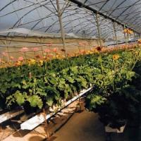 Hidroponia em flores (Montijo)