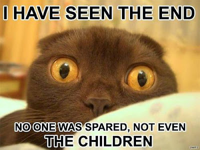 terrified%2Bdoom%2Bcat.jpg